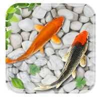 Fish Live Wallpaper 2018 Aquarium Koi Backgrounds android app